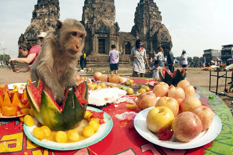 Monkey Buffet in Lopburi Thailand. Thailand Event Guide