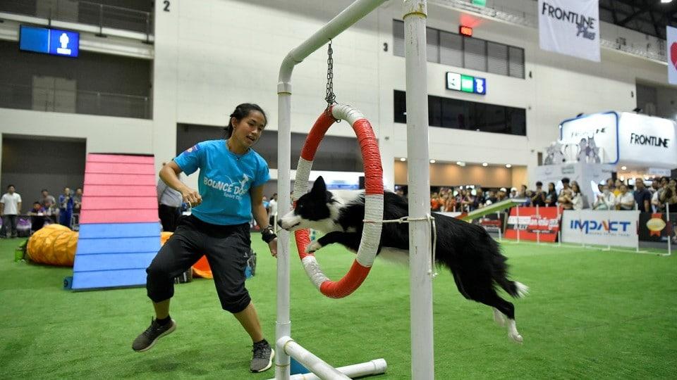 Thailand International Dog Show 2020