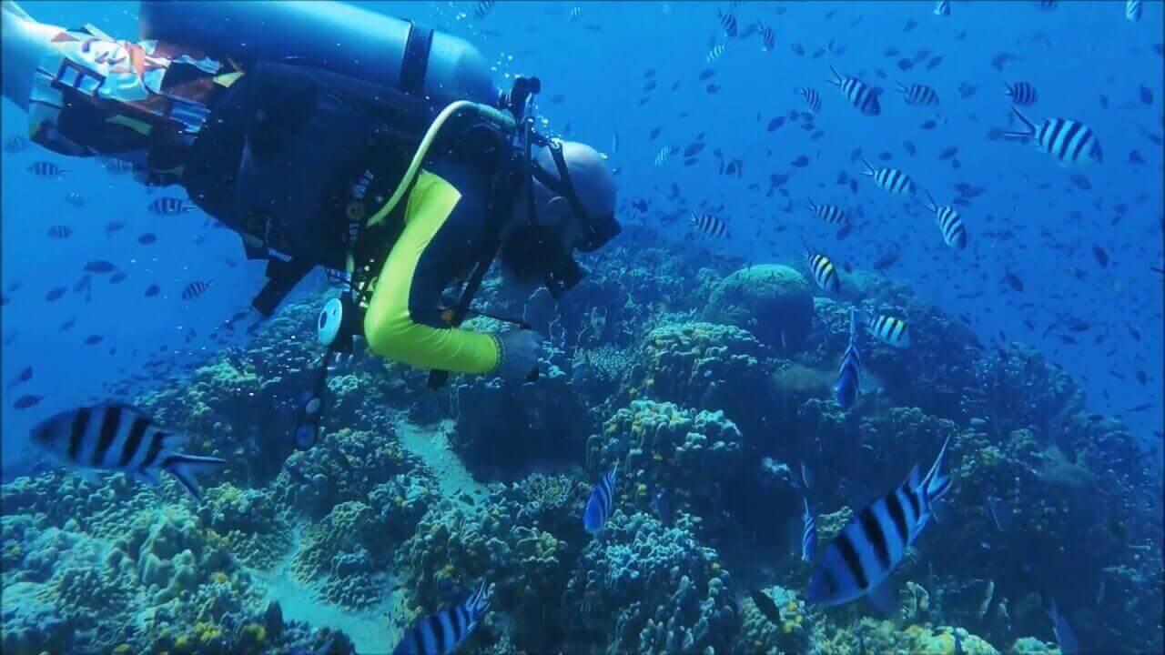 Scuba Diving in Thailand - Dream Jobs in Thailand