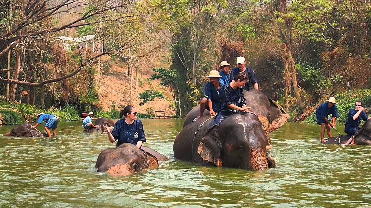 Dream Jobs in Thailand - Elephant Conservation